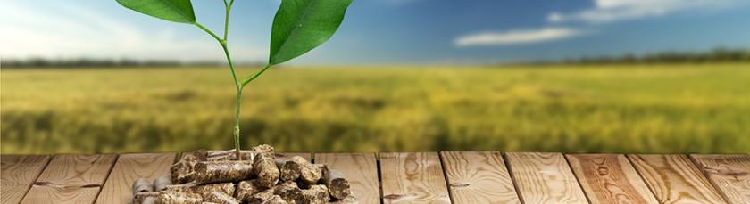 biomasse énergie pellets par Jean-Christophe Delhaye article du 23-05-2016