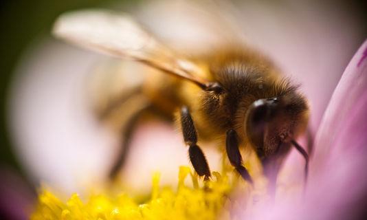 4656656_6_d3d9_paris-a-decide-de-prendre-le-parti-des_abeilles-Jean-Christophe Delhaye